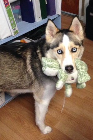 Someone Found Her Froggie