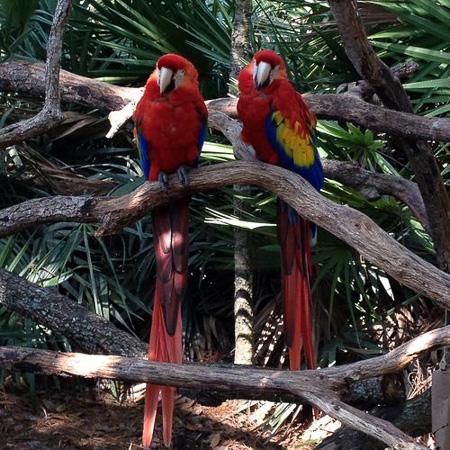 brevard zoo 5