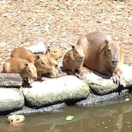 brevard zoo 8