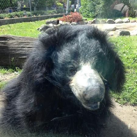 zoo adventure 10