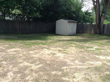 backyard huskies 6