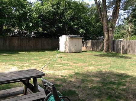 backyard huskies 7