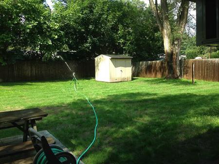 backyard huskies 9