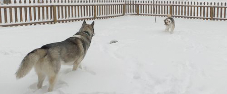 husky snow time